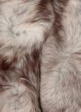 Struttura della pelliccia fotografia stock libera da diritti