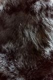 Struttura della pelliccia immagine stock libera da diritti