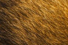 Struttura della pelliccia degli animali Fotografia Stock