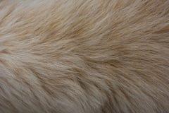 Struttura della pelliccia del cane Fotografia Stock