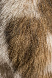 Struttura della pelliccia del cane Fotografie Stock