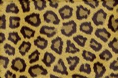 Struttura della pelliccia del leopardo Immagini Stock Libere da Diritti