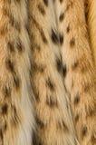 Struttura della pelliccia del lince Fotografia Stock Libera da Diritti