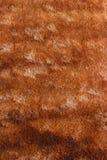 Struttura della pelliccia di Brown Immagini Stock