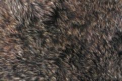 Struttura della pelliccia di Brown Fotografia Stock Libera da Diritti