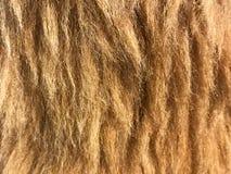 Struttura della pelliccia di falsificazione di Brown Immagini Stock Libere da Diritti
