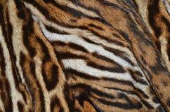 Struttura della pelliccia di Lynx Fotografia Stock Libera da Diritti