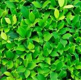 Struttura della pianta verde Immagine Stock
