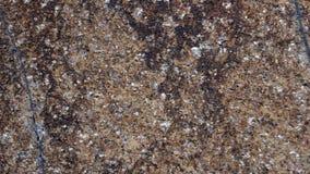 Struttura della pietra di Brown con gli splats bianchi Immagini Stock Libere da Diritti