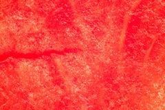 Struttura della polpa dell'anguria, macrofotografia, melone immagine stock libera da diritti