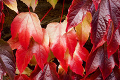 Struttura della priorità bassa dei fogli di autunno Fotografie Stock Libere da Diritti