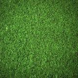Struttura della priorità bassa dell'erba verde Immagine Stock