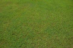 Struttura della priorità bassa dell'erba verde fotografie stock libere da diritti