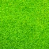 Struttura della priorità bassa dell'erba verde Fotografia Stock Libera da Diritti