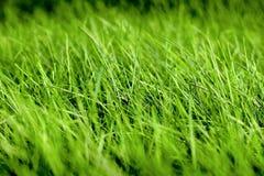 Struttura della priorità bassa dell'erba verde Fondo con la somma succosa luminosa immagini stock libere da diritti