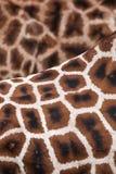 Struttura della priorità bassa della giraffa Fotografia Stock