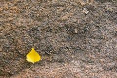 Struttura della roccia del granito con la foglia fotografie stock libere da diritti
