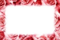 Struttura della rosa di rosa Fotografie Stock