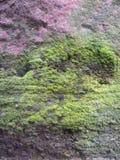 Struttura delle alghe immagini stock