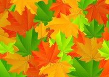 Struttura delle foglie di acero Immagine Stock Libera da Diritti