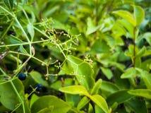 Struttura delle foglie verdi Belle foglie verdi, immagine di sfondo verde del modello immagini stock libere da diritti