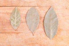 Struttura delle foglie verdi dell'alloro Fotografia Stock Libera da Diritti