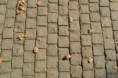 Struttura delle lastre per pavimentazione della pietra concreta rettangolare grigia sulla strada con le cuciture I cenni storici fotografia stock libera da diritti