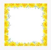 Struttura delle margherite gialle Illustrazione disegnata a mano dell'acquerello illustrazione vettoriale