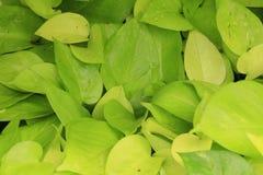 Struttura delle piante Immagini Stock