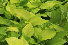 Struttura delle piante Fotografie Stock