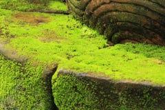 Struttura delle piante Fotografia Stock