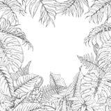 Struttura delle piante tropicali illustrazione di stock