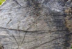 Struttura delle schede di legno Fotografie Stock Libere da Diritti