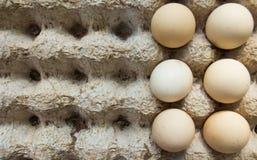 Struttura dello scaffale delle uova Immagini Stock