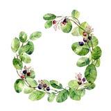 Struttura dello shadberry dei ramoscelli Illustrazione dell'acquerello Fotografie Stock Libere da Diritti