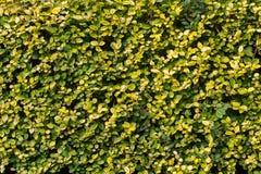 Struttura dettagliata della pianta di alta qualità Fotografia Stock
