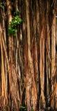 Struttura di alte putrefazioni in foresta pluviale Immagine Stock