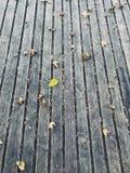 Struttura di autunno immagini stock