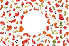 Struttura di autunno dalla sorba, dalle ghiande, dai fiori e dai vari frutti isolati su fondo bianco da sopra Designazione piana  Fotografia Stock