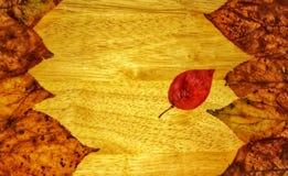 Struttura di autunno di fogliame fotografie stock libere da diritti