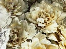 Struttura di bei fiori beige bianchi con i petali fertili delicati con le scintille I cenni storici fotografie stock