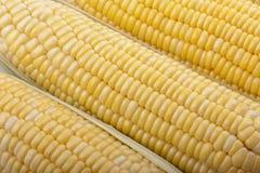 Struttura di cereale fresco Fotografie Stock Libere da Diritti