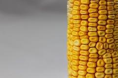 Struttura di cereale giallo fresco Fotografia Stock Libera da Diritti