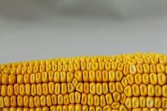 Struttura di cereale giallo fresco Fotografia Stock