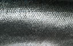 Struttura di color salmone del grunge delle scale di pesci Immagine Stock