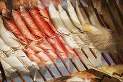 struttura di colore della piuma Fotografie Stock