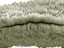 Struttura di corallo di pietra Fotografia Stock