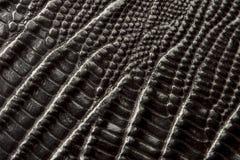 Struttura di cuoio del coccodrillo immagini stock libere da diritti