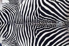 Struttura di cuoio della pelle della zebra verniciata Fotografia Stock Libera da Diritti
