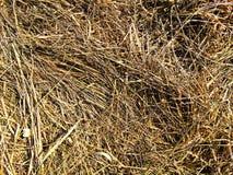 Struttura di erba asciutta Immagine Stock